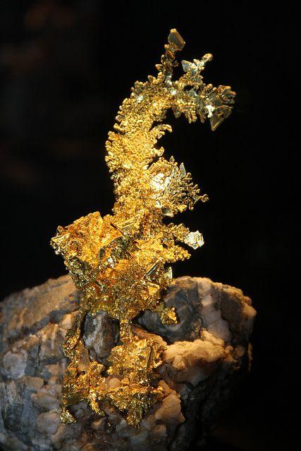 Dragon gold mineral specimen dragon golden white oak